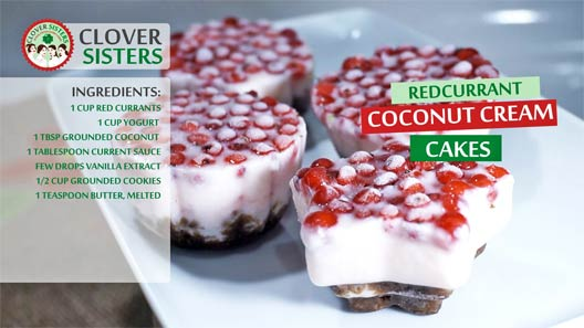 redcurrant coconut cream cakes recipe