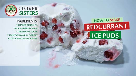 redcurrant ice puds recipe